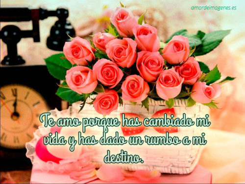 bellasflores2