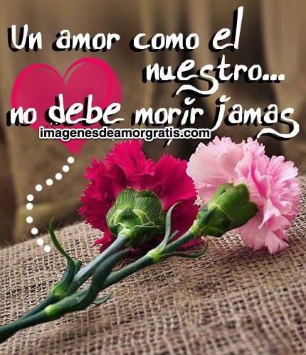 Imágenes Bellas De Flores Y Lindos Mensajes De Amor Para