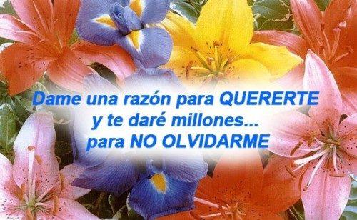 bellasflores30