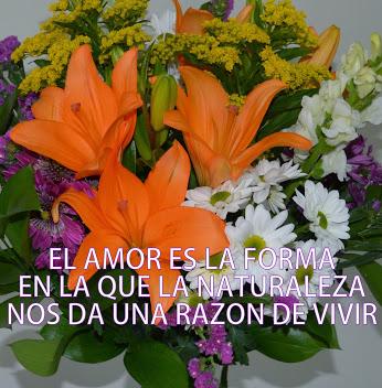 bellasflores32