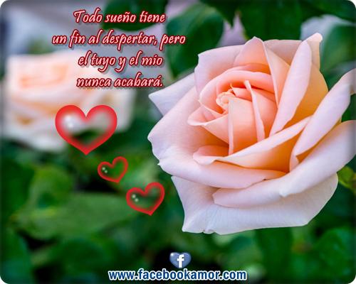 Imágenes bellas de flores y lindos mensajes de amor para regalar ...