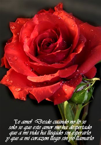 Dibujos De Rosas Imagenes Y Frases Romanticas Todo Imagenes