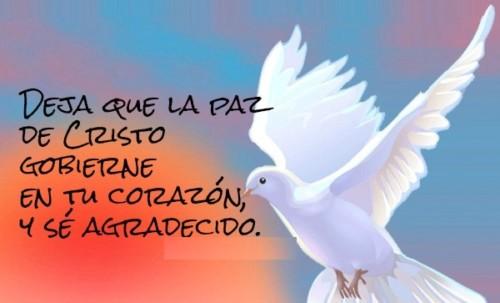 Imágenes Con Frases Alusivas A La Paz Y El Amor En El