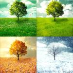 Las 4 Estaciones del Año: Causas, Solsticios, Equinoccios e Imágenes
