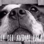 Imágenes, información y Frases para el Día del Animal