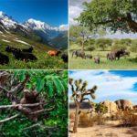 Imágenes de ecosistemas naturales: acuaticos, terrestres, aereos y mixtos