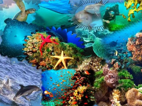 Imágenes De Ecosistemas Naturales Acuaticos Terrestres