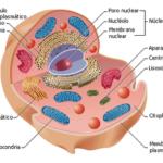 Imágenes de células, tipos, fotos e información
